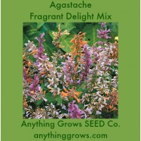 Agastache - Fragrant Delight Mix