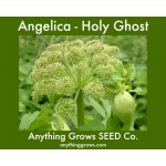 Herb - Angelica - Holy Ghost