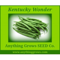 Pole Bean - Kentucky Wonder - Organic