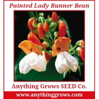 Pole Bean - Painted Lady Runner