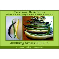 Bush Bean - Tri-Colour Bush Bean Mix
