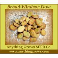 Bean - Broad Bean ~ Windsor Fava