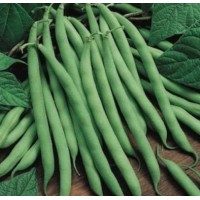 Bush Bean - Tendergreen - Organic