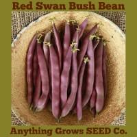 Bush Bean - Red Swan - Organic