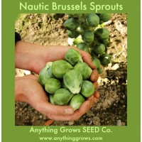 Brussels Sprouts - Nautic F1 - Organic