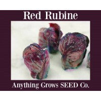 Brussels Sprouts - Red Rubine