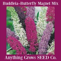 Buddleia - Butterfly Magnet Mix