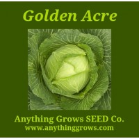 Cabbage -  Golden Acre - Organic
