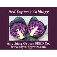 Cabbage -  Red Express - Organic