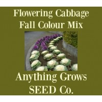 Cabbage - Flowering - Fall Colour Mix