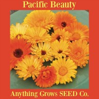 Calendula - Pacific Beauty - Organic