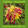 Amaranth - Callaloo - Joseph's Coat