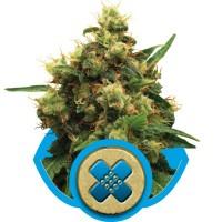 HERB - CBD Painkiller XL