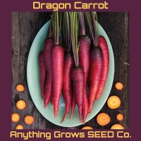 Carrot - Dragon - Organic