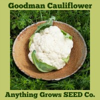 Cauliflower - Goodman - Organic