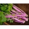 Celery - Chinese Pink