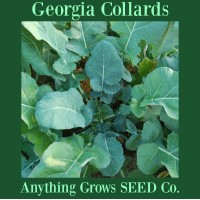 Collards - Georgia - Organic