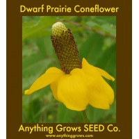 Coneflower - Dwarf Yellow Prairie