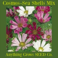 Cosmos - Sea Shells Mix