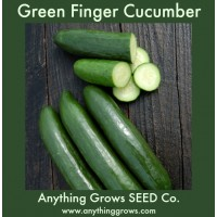 Cucumber - Green Finger - Organic
