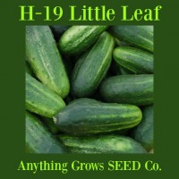 Cucumber - H-19 Little Leaf - Organic
