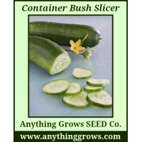 Cucumber - Container Bush Slicer