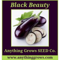 Eggplant - Black Beauty - Organic