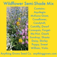 Flowers - Wildflower Semi-Shade Mixture