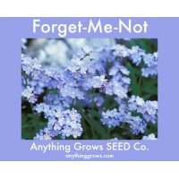Forget Me Not - Myosotis Blue
