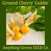 Ground Cherry - Goldie - Organic