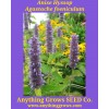 Anise Hyssop - Agastache