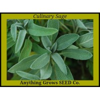 Herb - Sage - Common - Organic