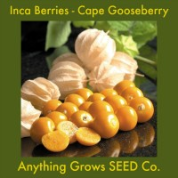Cape Gooseberry - Inca Berries