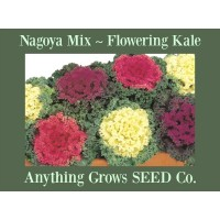 Kale - Flowering - Nagoya Mixed