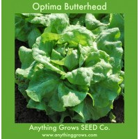 Lettuce - Optima Butterhead - Organic
