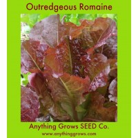 Lettuce - Outredgeous Romain/Cos - Organic