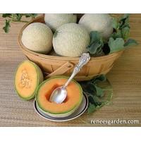 Melon - Sugar Cube - Mini Cantaloupe