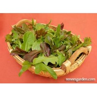Lettuce Mix - Cut & Come Again Mesclun Mix