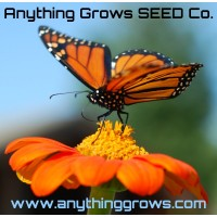 Sunflower - Tithonia, Torch - Mexican Sunflower
