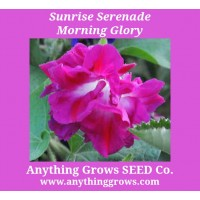 Morning Glory - Sunrise Serenade - Ipomoea purpurea