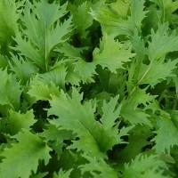 Mustard - Mizuna - Organic