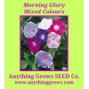 Morning Glory - Mixed Colours