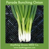 Onion - Parade Bunching - Organic