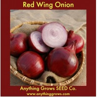 Onion - Red Wing - Organic