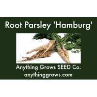 Herb - Parsley Root - Hamburg