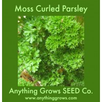Herb - Parsley - Moss Curled - Organic