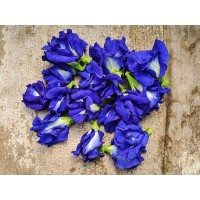 Pea - Thai Double Blue Butterfly Pea
