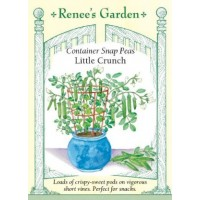 Pea - Little Crunch - Container Snap Pea