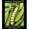 Pea - Laxton's Progress #9 - Organic