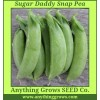 Pea - Sugar Daddy Snap - Organic